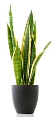 Best Indoor Plants To Reduce Pollution