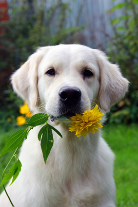 Photos Of Poisonous Plants And Flowers For Dogs
