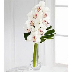 Charismatic Luxury Orchid Bouquet