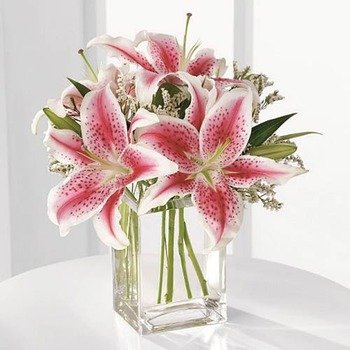 please note while lilies are safe for dogs, they are toxic to cats