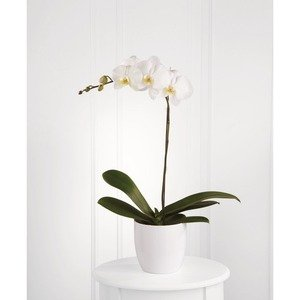 Palm springs ca flower delivery same day 1st in flowers white orchid planter mightylinksfo