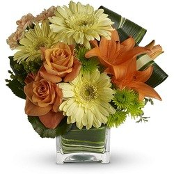 Teleflora's Citrus Crush