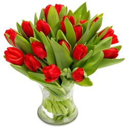 Ravishing Red Tulips (Vase not included)
