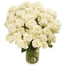 White roses (Vase not included)