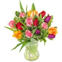 Tulips (Vase not included)