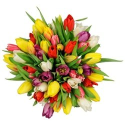 Seasonal Tulips Bouquet (Vase Not Included)