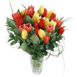 Bouquet of Tulips (Vase not included)