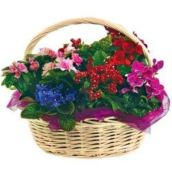 Basket of Miscellaneous