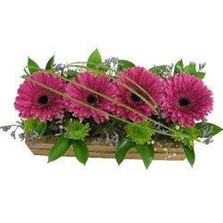 Gerberas in Box