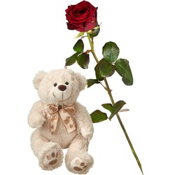 1 Red Rose (long stem) with teddy bear (white)