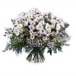 Bouquet of White Margaritte Daisies (Vase Not Included)