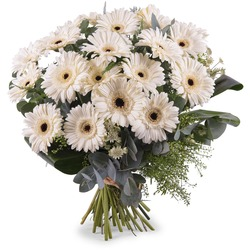 Bouquet of White Gerbera Daisies (Vase Not Included)
