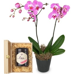 Deep pink Orchid (Phalaenopsis) in cachepot with Swiss blossom honey