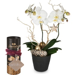 """Festive Orchid (Phalaenopsis), Gottlieber cocoa almonds and hanging gift tag """"Merry Christmas"""""""