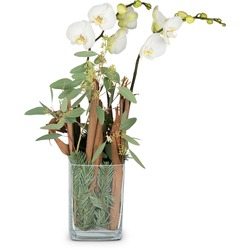 Natural winter poetry (orchid plant in vase)