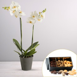 White phalaenopsis orchid with a box of chocolate almonds