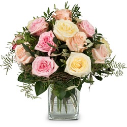 Cordial Rose Greeting (Vase not included)