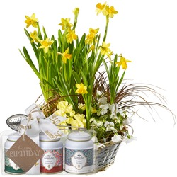 """Sunny Spring Garden (planted) with Gottlieber tea gift set and hanging gift tag """"Happy Birthday"""""""