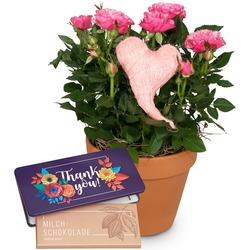 """Heartfelt Surprise (rose plant with heart) with bar of chocolate """"Thank you"""""""