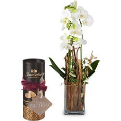 """Enchantment (orchid with vase) with Gottlieber cocoa almonds and hanging gift tag """"Happy Birthday"""""""