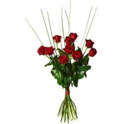 Bouquet with 10 red roses (Vase not included)