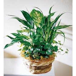 Arrangement of Plants with Bromelia